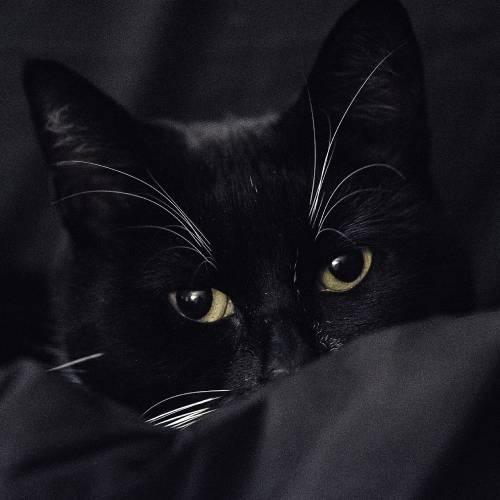 cute kitty, but a bad choice of photo to turn into a cricut cut file